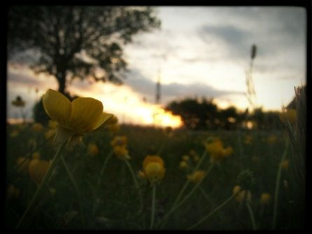 yellow_fields_of_Death-1-1