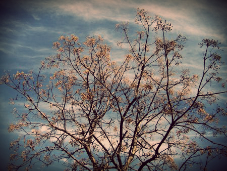 twigs_of_Being_poem