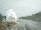 Birdfield