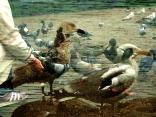 Birdfield2