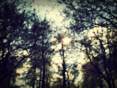 copa_de_árboles