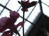 numenous&flora15