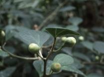 numenous&flora16