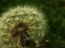 numenous&flora2