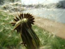 numenous&flora3