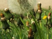 numenous&flora5