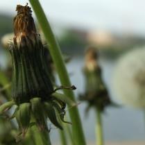 numenous&flora6