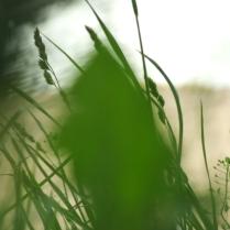 numenous&flora9