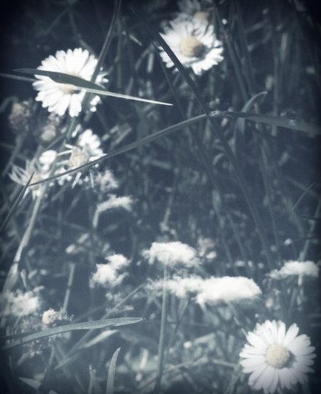 flower_poem