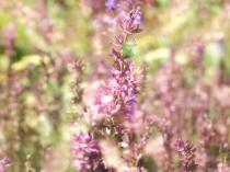Mysticism & Flowerage 1