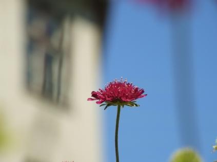 Mysticism & Flowerage 13