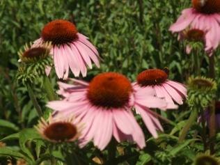 Mysticism & Flowerage 14