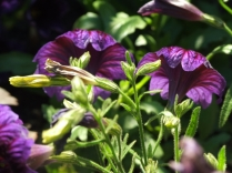 Mysticism & Flowerage 19