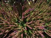 Mysticism & Flowerage 2