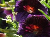 Mysticism & Flowerage 20