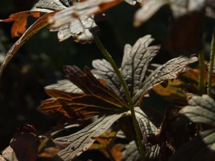 Mysticism & Flowerage 21