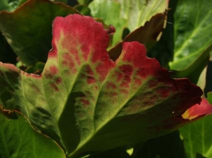 Mysticism & Flowerage 23