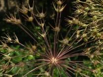 Mysticism & Flowerage 26