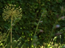 Mysticism & Flowerage 27
