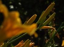Mysticism & Flowerage 28