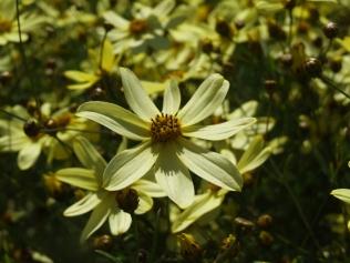 Mysticism & Flowerage 29