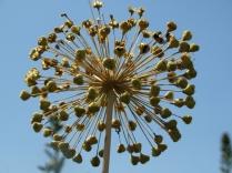 Mysticism & Flowerage 30
