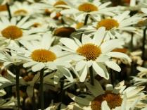 Mysticism & Flowerage 31