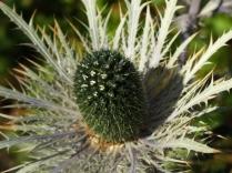 Mysticism & Flowerage 8
