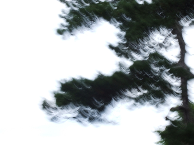 restless_trees_!