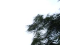 restless_trees_10