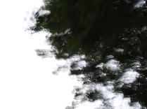 restless_trees_11