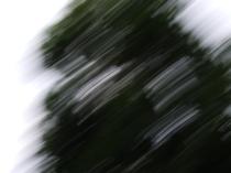 restless_trees_12
