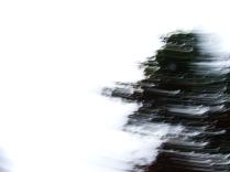 restless_trees_13