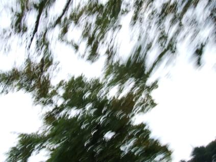 restless_trees_15