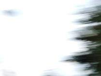 restless_trees_2