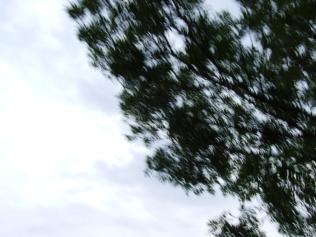 restless_trees_5