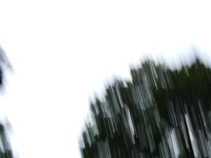restless_trees_7