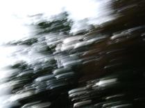 restless_trees_9