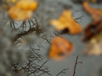 Autumn Layers 16