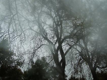 Autumn Layers 6